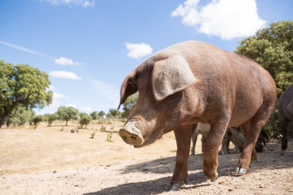 Impactante la reserva natural de Hacienda Zorita, donde poder pasear o descubrir la ganadería local